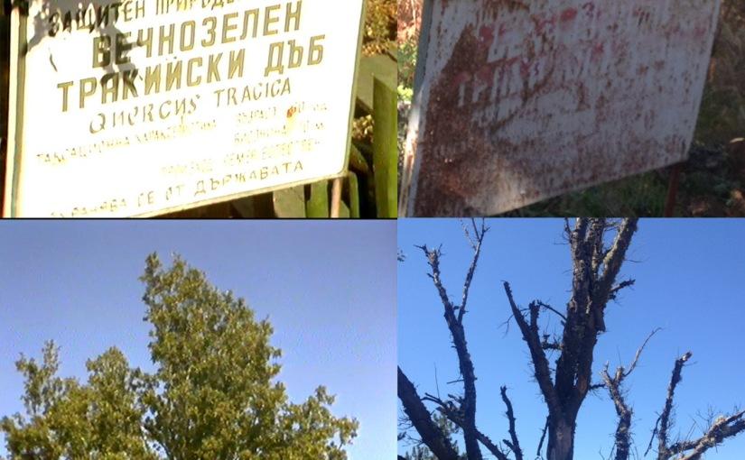 Крумовград през 80-те – Единствения вечнозелен дъб вБългария